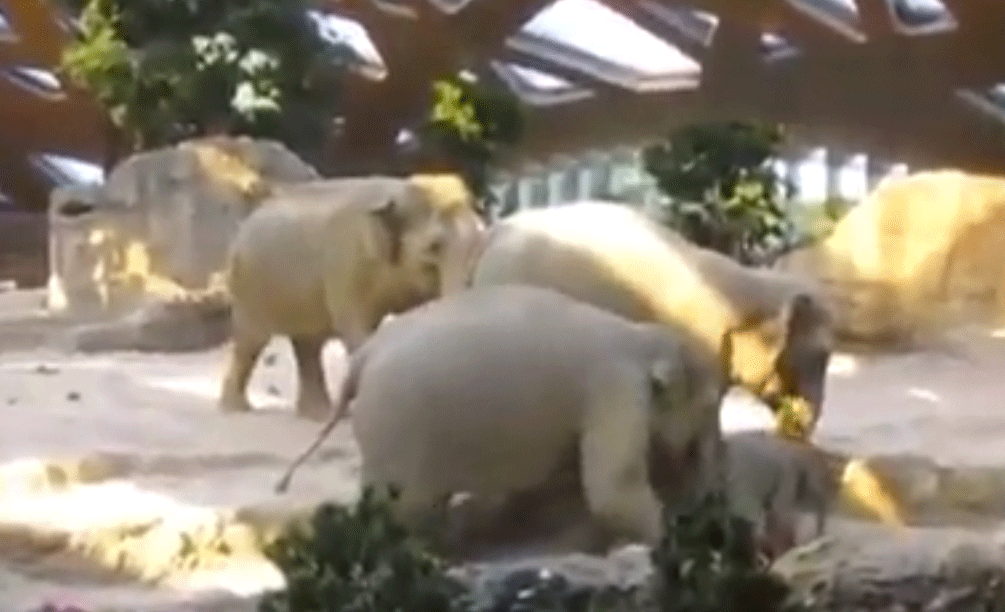 Polar bears having a threeway